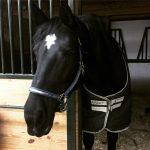 Horse Lameness