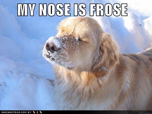 Pet Immunity During Winter
