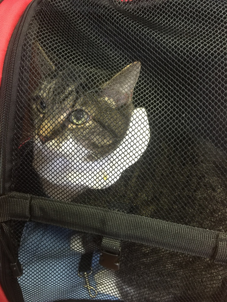 Cat Constipation, Allergies & Digestive Issues
