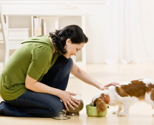 Rotating Your Pet's Food