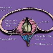 ear canal