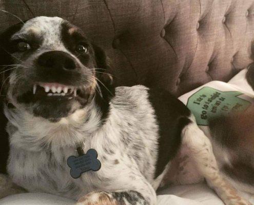 kibble for healthy dog